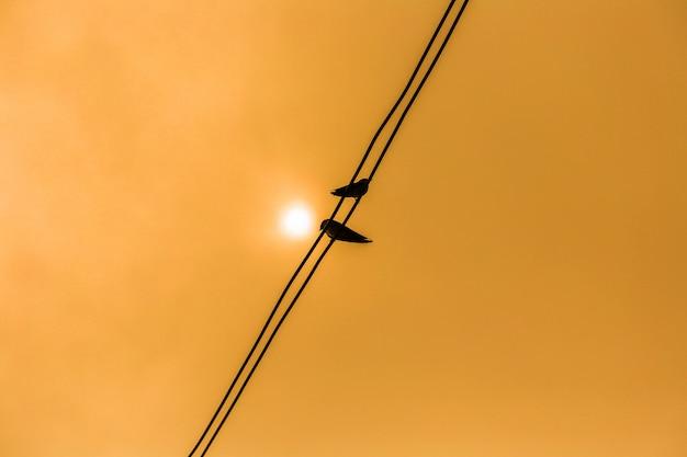 Schattenbild der vögel auf den drähten. vögel sitzen auf drähten im sonnenuntergang und freund.