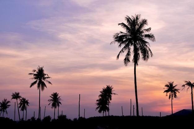 Schattenbild des kokosnussbaums mit dämmerungshimmel