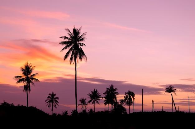 Schattenbild des kokosnussbaums mit twilight himmel