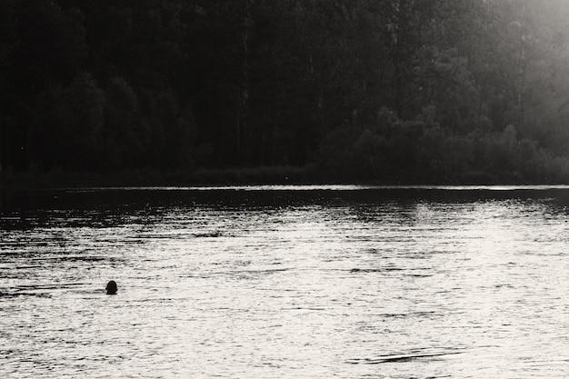 Schattenbild des schwimmenden mannes in der mitte des flusses auf waldhintergrund. sonnenlicht reflektiert auf wasser in graustufen. glänzendes wasser im fluss. monochrome erstaunliche atmosphärische landschaft. minimalistische szene.
