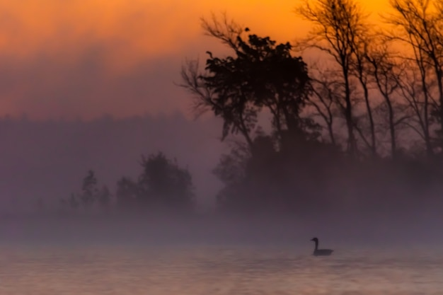 Schattenbild des sonnenaufgangs um die bäume in der halbinsel von michigan