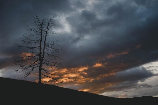 Schattenbild des trockenen baumes gegen hintergrund des dramatischen himmels bei sonnenuntergang