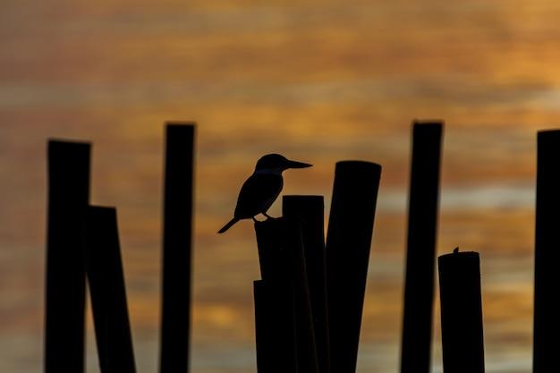 Schattenbild des vogels bei sonnenaufgang morgens