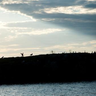 Schattenbild einer menge der vögel am see des holzes, ontario, kanada