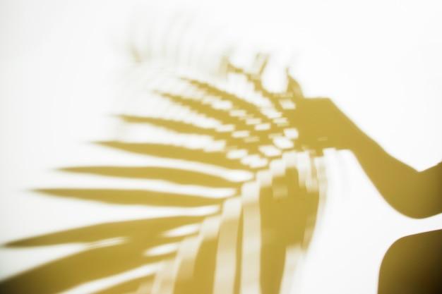 Schattenbild einer person, die unscharfes palmblatt auf weißem hintergrund hält