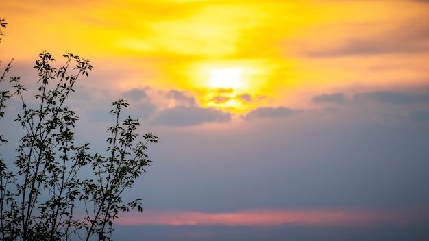 Schattenbild eines baumes auf einem hintergrund des malerischen himmels während des sonnenuntergangs. himmelhintergrund bei sonnenuntergang.