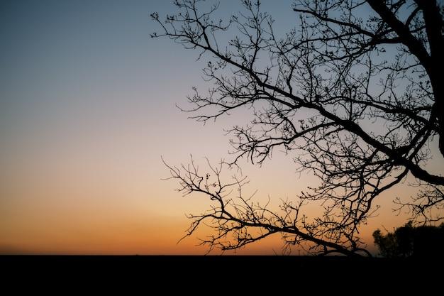 Schattenbild eines baumes während eines orangefarbenen sonnenuntergangs