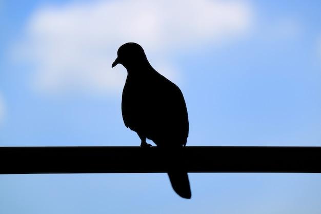 Schattenbild eines einsamen vogels, der auf dem zaun gegen blauen bewölkten himmel hockt