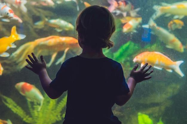 Schattenbild eines jungen, der fisch im aquarium betrachtet.