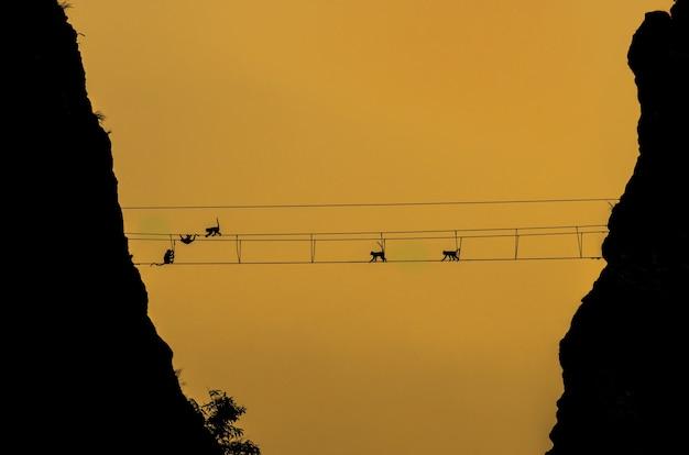 Schattenbild von affen auf der seilbrücke zur sonnenuntergangzeit