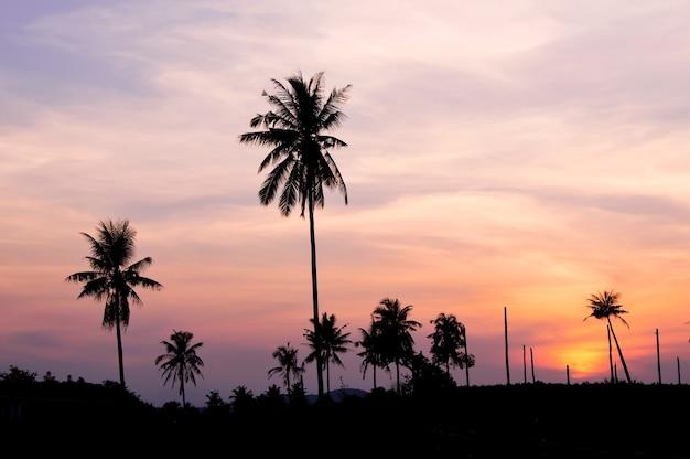 Schattenbild von kokosnussbäumen mit der dämmerung aky