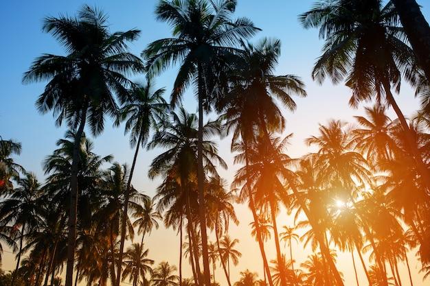 Schattenbild von kokosnusspalmen auf buntem sonnensatz