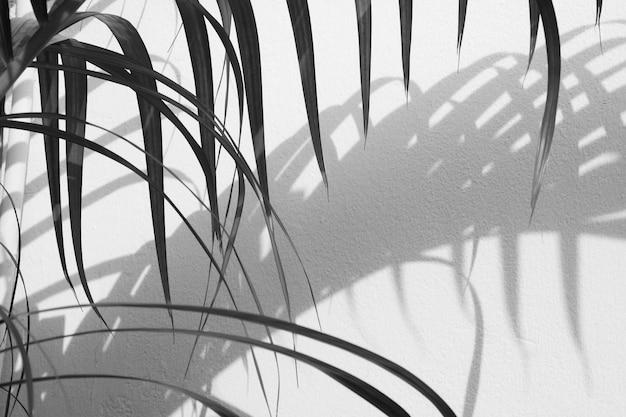 Schattenbild von palmblättern und von schatten auf einer betonmauer - monochrom