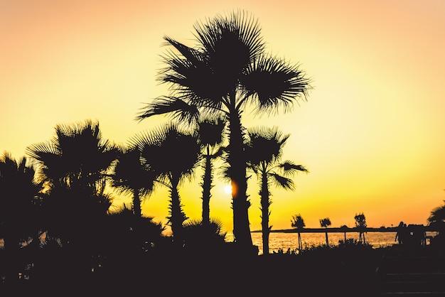 Schattenbild von tropischen palmen und von küste mit sonnenlicht zur sonnenuntergangzeit.
