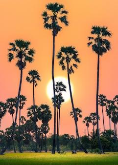 Schattenbild von zuckerpalmen und von reisfeld auf schöner himmeldämmerungszeit.
