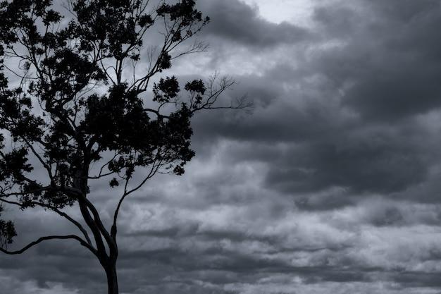 Schattenbildbaum und zweig auf grauem himmel und wolken