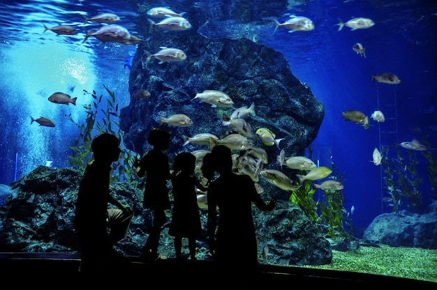 Schattenbilder der familie mit zwei kindern im ozeanarium, fische im aquarium betrachtend
