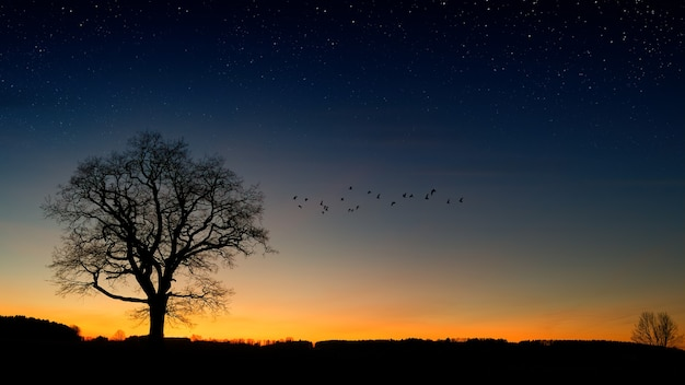 Schattenbildfotografie von bäumen