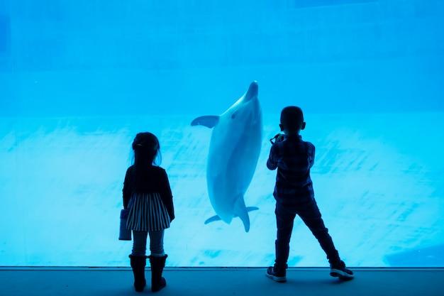 Schattenbildkinder, die delphin im aquarium aufpassen