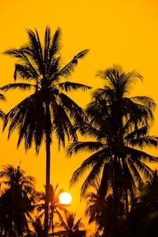 Schattenbildkokosnussbaum mit sonnenunterganghimmel.