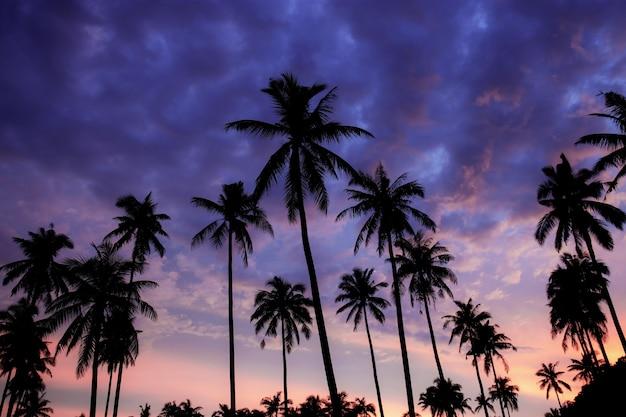 Schattenbildpalme am purpurroten himmel.