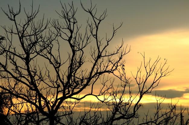 Schattenbildschattenbaum auf sonnenunterganghimmel fühlen sich wie allein