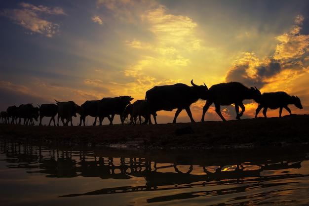 Schattenbildsonnenuntergang mit lebensstillandschaft