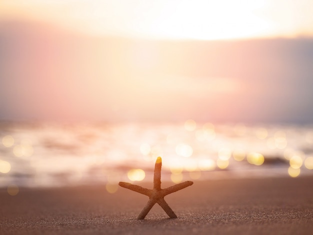 Schattenbildstarfish auf sand am sonnenuntergangstrand