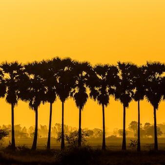 Schattenbildzuckerpalme auf sonnenaufganghimmel