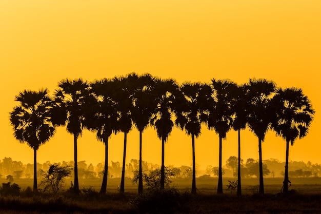 Schattenbildzuckerpalme auf sonnenunterganghimmel