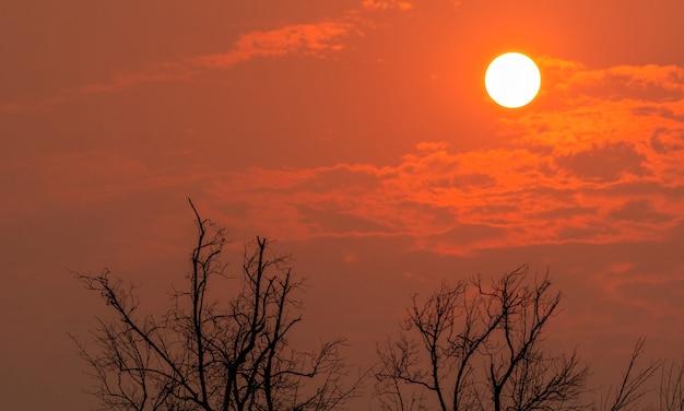 Schattenloser blattloser baum und runde sonne am sonnenuntergangshimmel. toter baum auf rotem sonnenuntergangshimmelhintergrund.