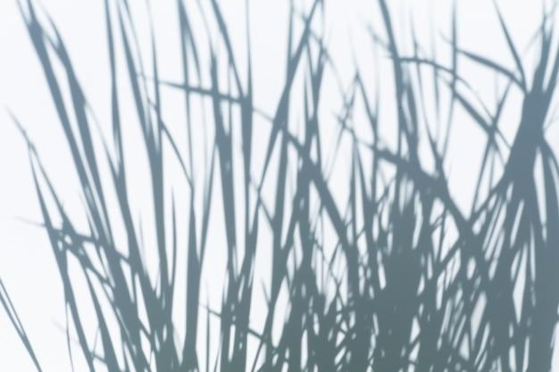 Schattenüberlagerungseffekt für fotoschatten von baumblättern und tropischen zweigen auf einer weißen wand im sonnenlicht hochwertiges foto