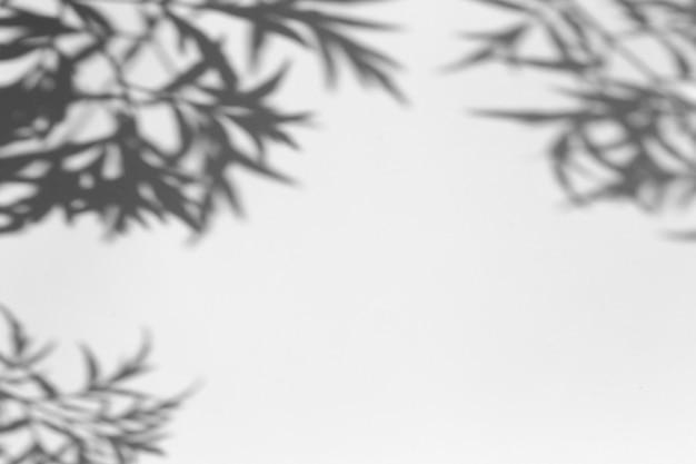 Schattenüberlagerungseffekt. schatten von baumblättern und tropischen zweigen auf einer weißen wand im sonnenlicht.