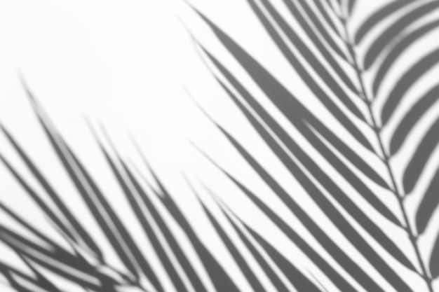 Schattenüberlagerungseffekt. schatten von palmblättern und tropischen zweigen auf einer weißen wand im sonnenlicht.