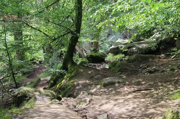 Schattiger pfad mit großen felsen entlang ekkodalen, dem längsten riss in dänemark
