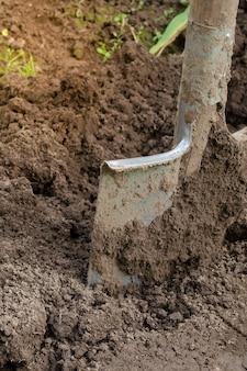 Schaufel in den boden. boden für land vorbereiten. den boden graben und umdrehen.