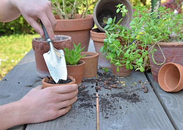 Schaufelhaltung durch gärtnerhände topfpflanze auf hölzernem hintergrund im garten
