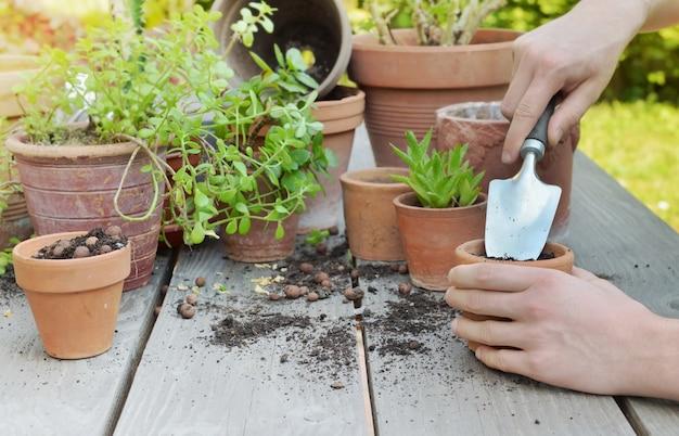 Schaufelhaltung durch gärtnerhände topfpflanze auf hölzernem hintergrund in einem garten