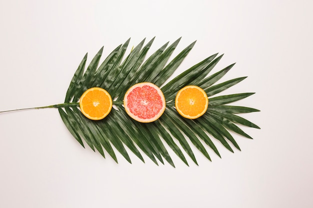 Scheiben saftige pampelmuse und orange am palmblatt