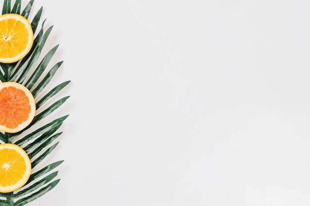 Scheiben von zitrusfrüchten auf frischem blatt