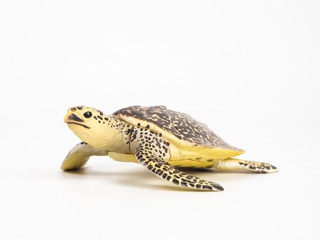 Schildkröte auf weiß