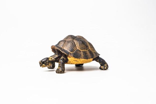 Schildkröte auf weißem hintergrund