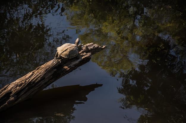 Schildkröte im wald