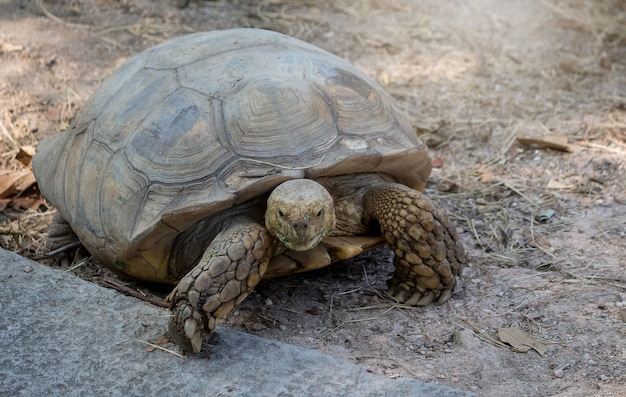Schildkröte im zoo, schöne schildkröten