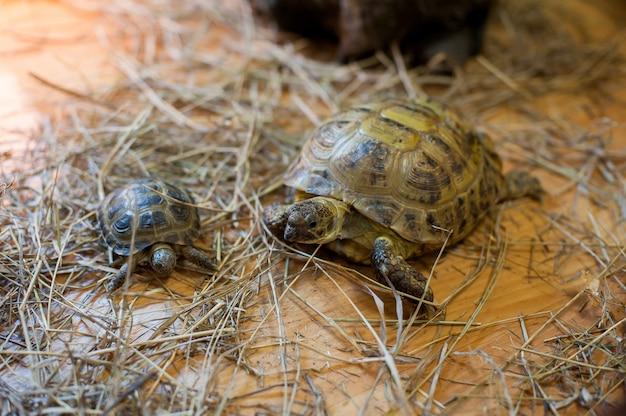 Schildkröte in kontakt zoo. schildkröte im terrarium