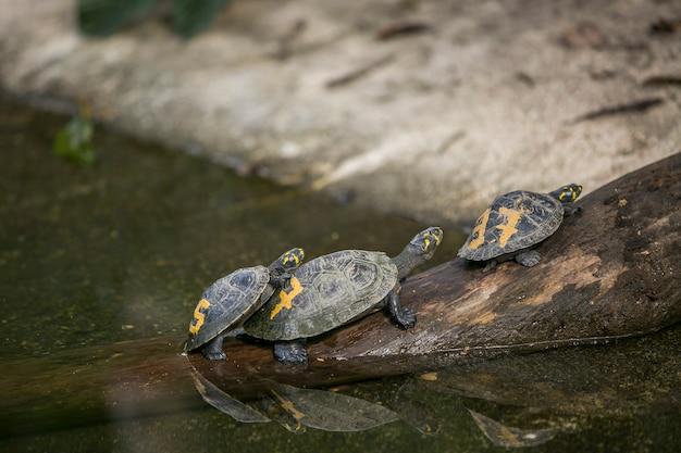 Schildkröten in tierheim in bolivien