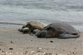 Schildkröten meer