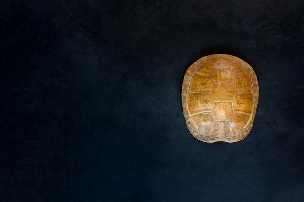 Schildkrötenpanzerlüge auf schwarzem hintergrund. ansicht von oben