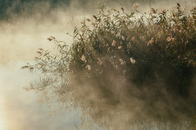 Schilf am wasser und der herbstliche morgennebel auf dem see bei sonnenaufgang
