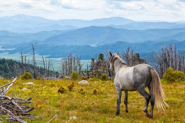 Schimmel, die frei in wiese mit wald mit hohem berg-, fluss- und himmelhintergrund laufen. pferd in freier wildbahn.